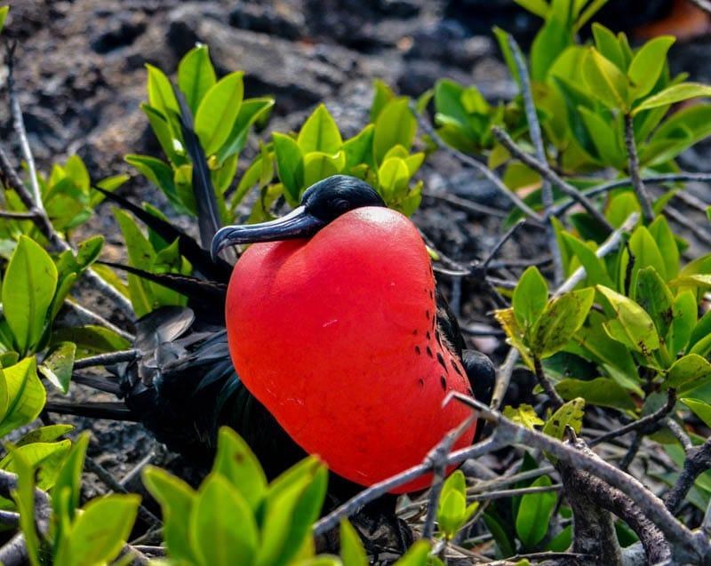 Cosa fare a Puerto Ayora – Isole Galapagos
