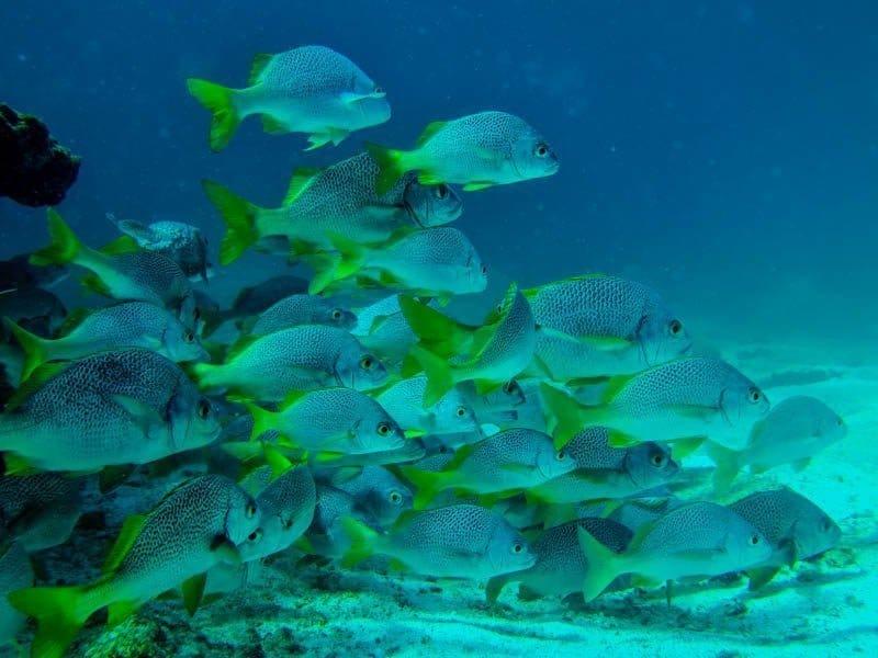 galapagos fishes