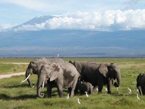Viaggio in Kenya – L'avventura del Safari vicino al Mare