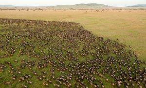 La grande migrazione in Tanzania