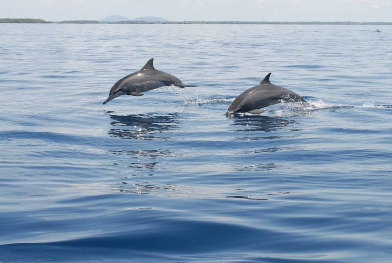 delfini kenya