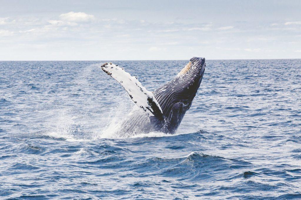 balene ecuador