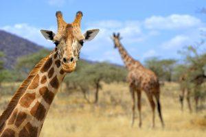 10 emozionanti parchi dove fare Safari in Kenya
