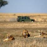 Serengeti mese per mese – Guida per visitare il parco più famoso d'Africa