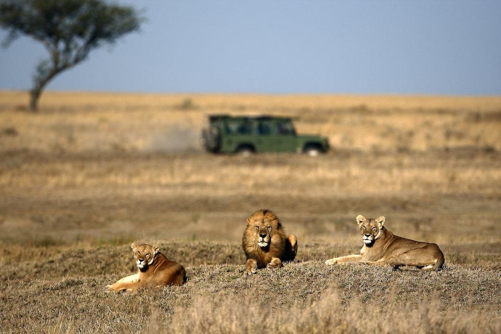 Safari in Tanzania o in Kenya? Come scegliere il giusto safari