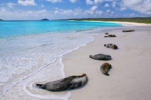 Gardner Bay Galapagos