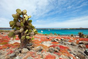 Il Parco Nazionale Galapagos